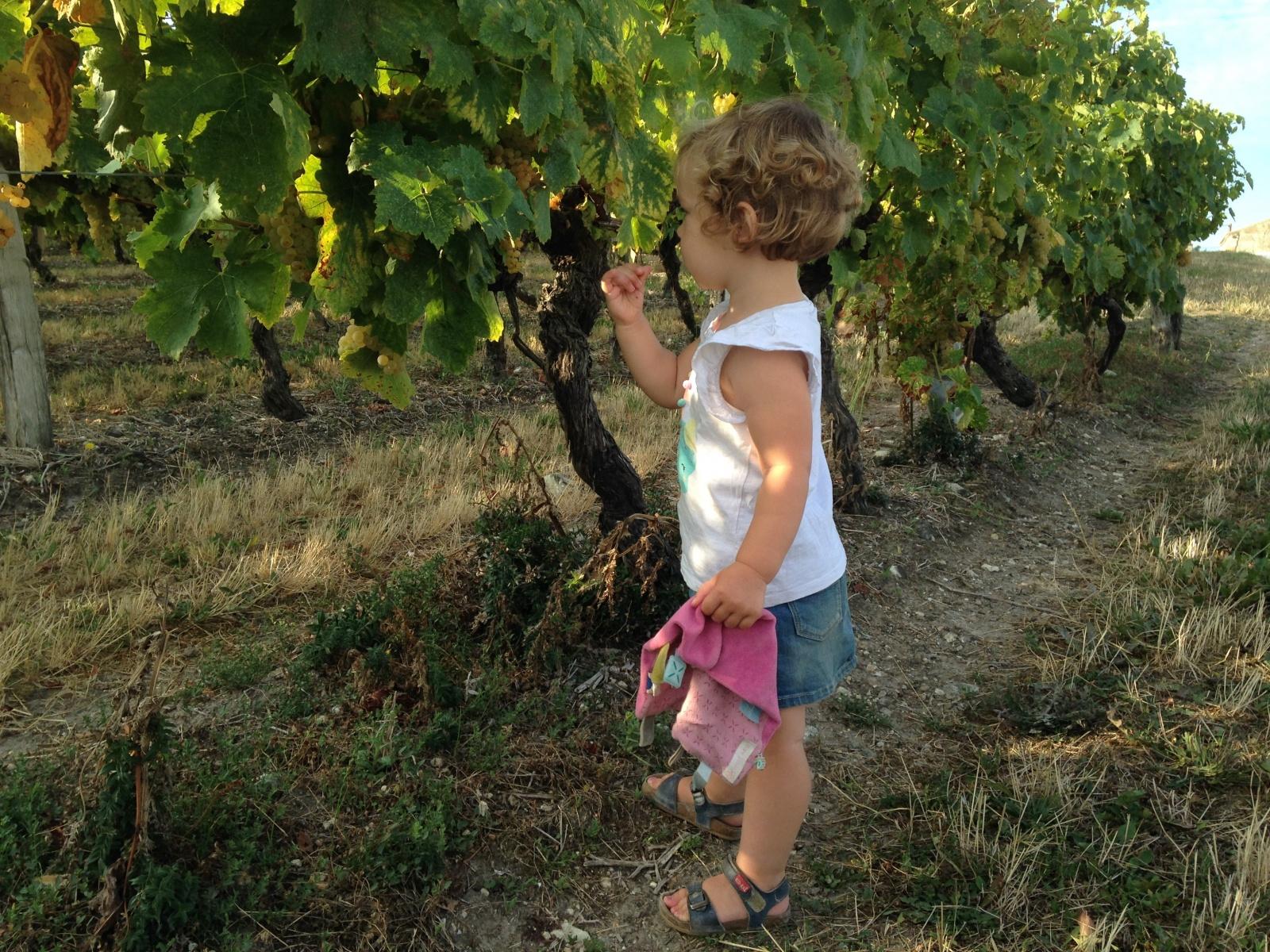 Druiven proeven Charente Martitime Le Petit Chenac vakantiehuisjes__1540894127_176.164.201.224